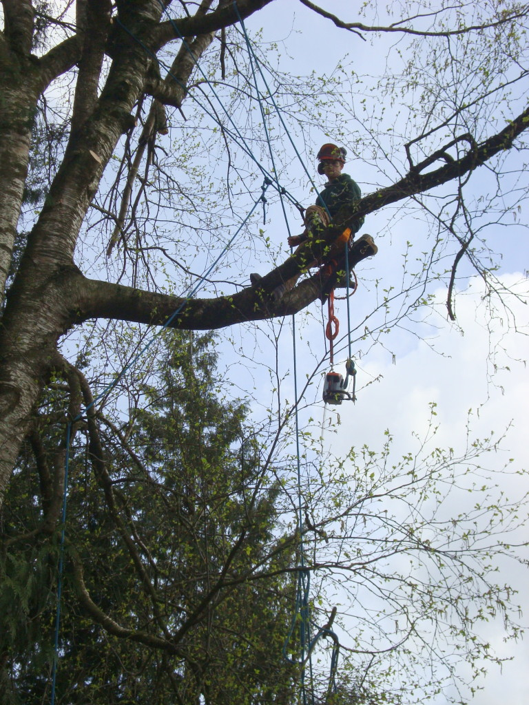 Tree Rigging