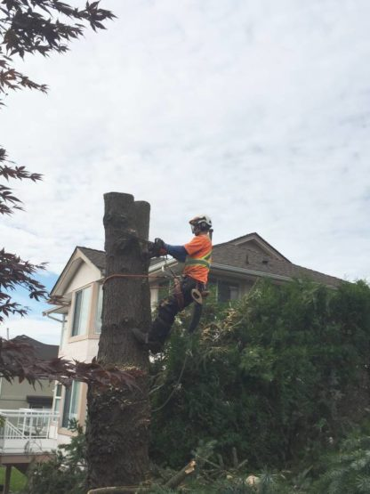Abbotsford Tree Service