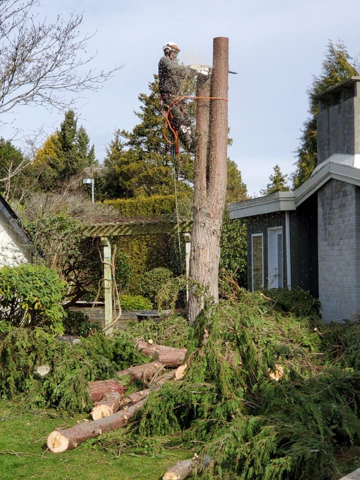 delta tree removal